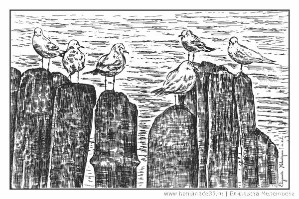 Балтийские чайки на волнорезе.