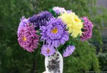 Как сделать цветы астры из фоамирана – мастер-класс